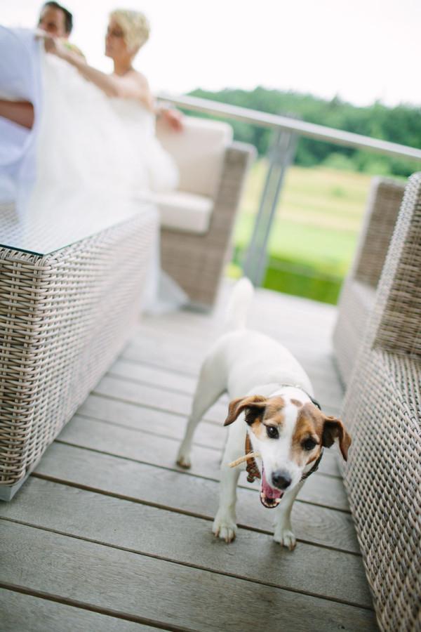 Hund mit Brautpaar im Hintergrund